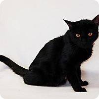 Adopt A Pet :: Kalypso - Toccoa, GA