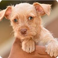 Adopt A Pet :: Dewey - Los Angeles, CA