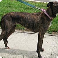 Adopt A Pet :: Maggie - New Kensington, PA