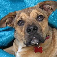 Adopt A Pet :: Coco Ruby - Cuba, NY