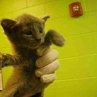 Adopt A Pet :: ELVIS - Jacksonville, FL