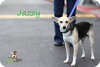 Shepherd (Unknown Type)/Terrier (Unknown Type, Small) Mix Dog for adoption in Alpharetta, Georgia - Jazzy
