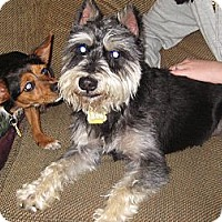 Adopt A Pet :: Heineken - Commerce City, CO