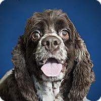 Adopt A Pet :: Leo Jr. - Rancho Mirage, CA