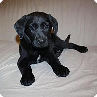 Adopt A Pet :: Aubrey - in Maine - kennebunkport, ME