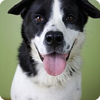 Adopt A Pet :: Joey - West Allis, WI