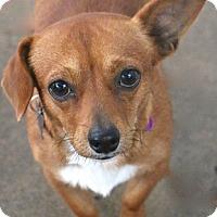 Adopt A Pet :: Tuck - Norwalk, CT