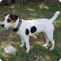 Adopt A Pet :: Inka in College Station - Houston, TX