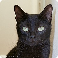 Adopt A Pet :: Juno - Huntsville, AL