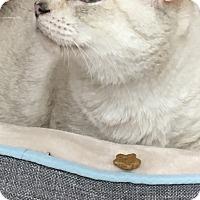 Adopt A Pet :: Toffee - Richmond, VA