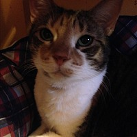 Adopt A Pet :: CUTIE - Ridge, NY