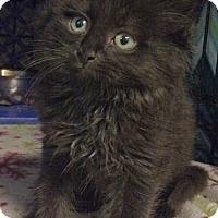 Adopt A Pet :: Tyler - East Brunswick, NJ