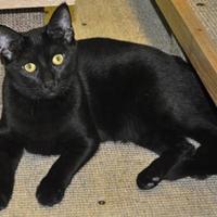 Adopt A Pet :: Sabrina - Suwanee, GA