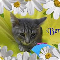 Adopt A Pet :: Bert - Buffalo, IN