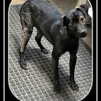 Adopt A Pet :: Victor - Tombstone, AZ