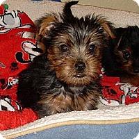 Adopt A Pet :: ARGENEAU - Loxahatchee, FL