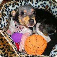 Adopt A Pet :: Sparkplug - Oklahoma City, OK