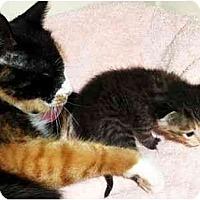 Adopt A Pet :: Sunny - October 1 - Spencer, NY
