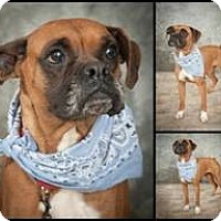Adopt A Pet :: JASMINE - North Haven, CT