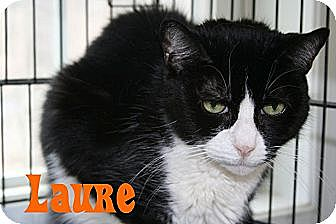 Domestic Shorthair Cat for adoption in East Stroudsburg, Pennsylvania - Laure