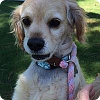 Adopt A Pet :: Ligety - Sugarland, TX