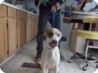 Terrier (Unknown Type, Medium) Mix Dog for adoption in Rio Rancho, New Mexico - Baby Girl