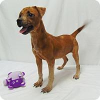Adopt A Pet :: Daisy - Lufkin, TX