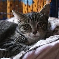 Adopt A Pet :: Hickory - New City, NY