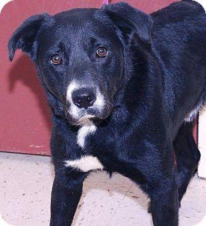 Retriever (Unknown Type) Mix Dog for adoption in McDonough, Georgia - Kato