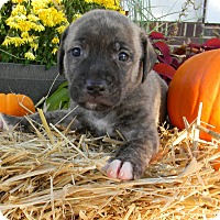 Adopt A Pet :: Rio - Millersville, MD