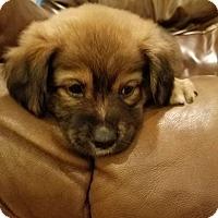 Adopt A Pet :: Michone - Fredericksburg, VA