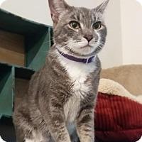 Adopt A Pet :: Kaila - Brooklyn, NY