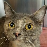 Adopt A Pet :: Sasha - Danville, KY