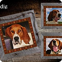 Adopt A Pet :: Indie ADOPTED - Ontario, ON
