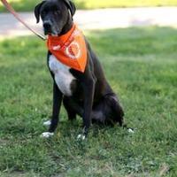 Adopt A Pet :: Castle - Clay Center, KS
