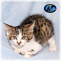 Adopt A Pet :: Surrey - Howell, MI