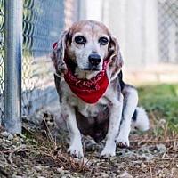 Adopt A Pet :: Charm - Transfer, PA