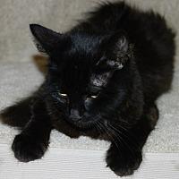 Adopt A Pet :: Aquila - North Highlands, CA