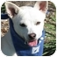 Photo 1 - Chihuahua Mix Dog for adoption in San Diego, California - Awesome