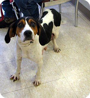 Hound (Unknown Type) Mix Dog for adoption in Ludington, Michigan - Silvan
