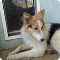 Adopt A Pet :: Luke - Riverside, CA