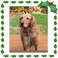 Adopt A Pet :: Max - New Canaan, CT
