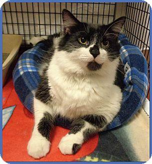 Domestic Mediumhair Cat for adoption in Marietta, Georgia - PIP (R)