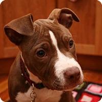 Adopt A Pet :: Dora - Framingham, MA