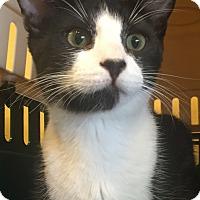 Adopt A Pet :: Droxie - Encinitas, CA