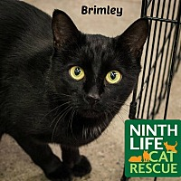 Adopt A Pet :: Brimley - Oakville, ON