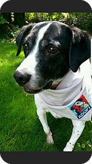 Border Collie Mix Dog for adoption in Union Grove, Wisconsin - Max-NICE BOY