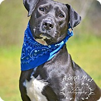 Adopt A Pet :: BO - Fort Valley, GA