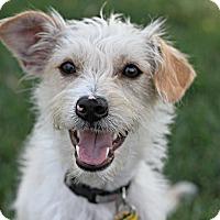 Adopt A Pet :: Dusty - Bellflower, CA
