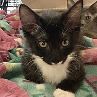 Adopt A Pet :: Prince Rainier - Gilbert, AZ